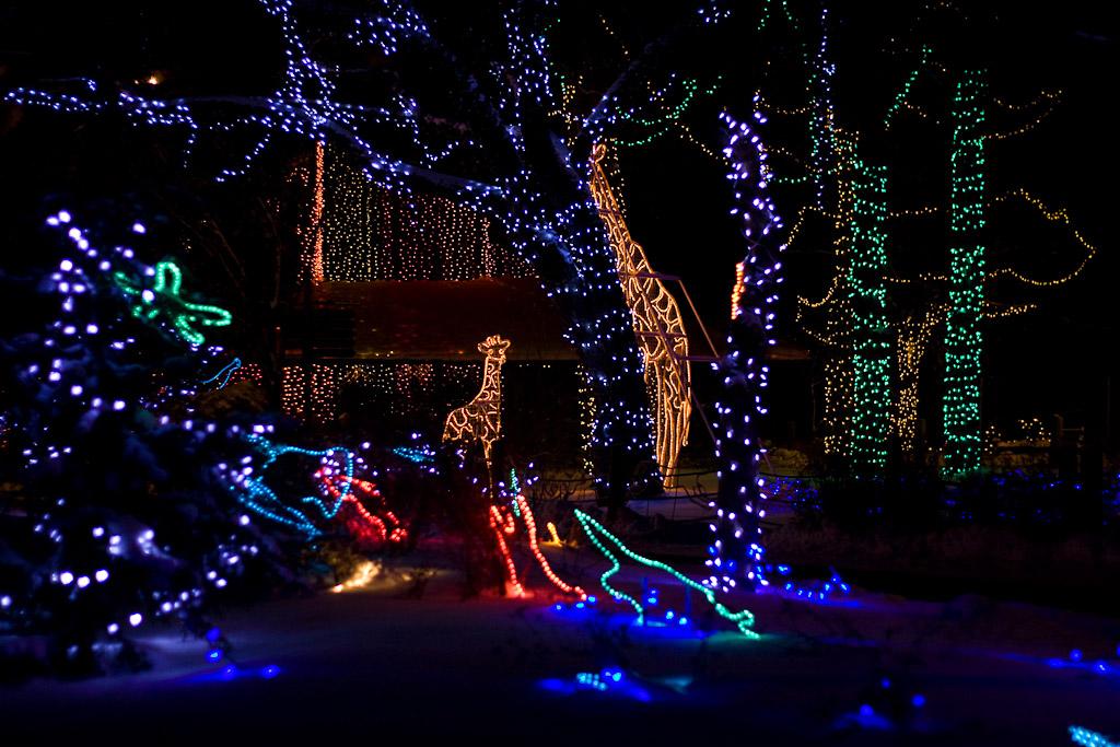 The christmas lights at the Calgary Zoo