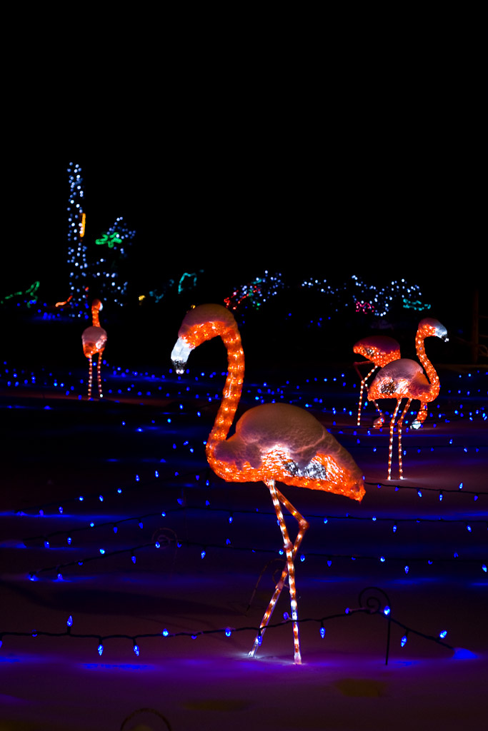 zoo lights calgary.