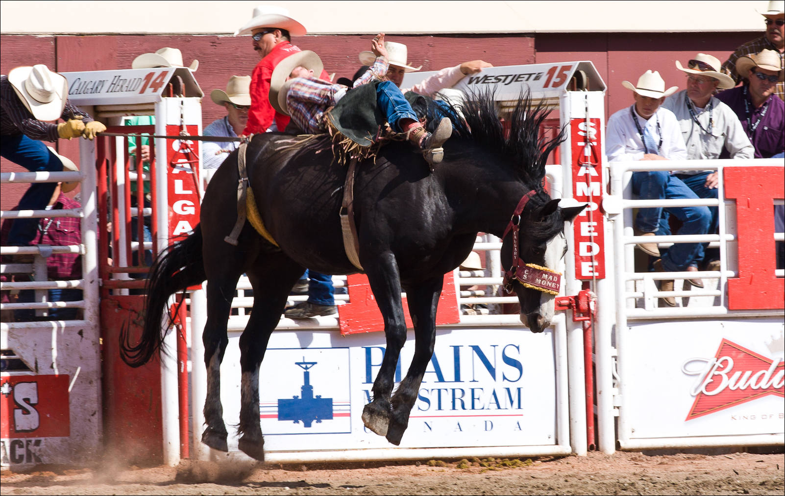 Calgary Stampede Rodeo Finals Christopher Martin