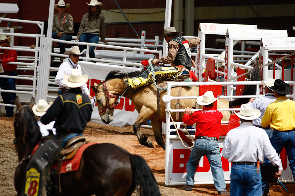 Saddle Bronc Christopher Martin Photography