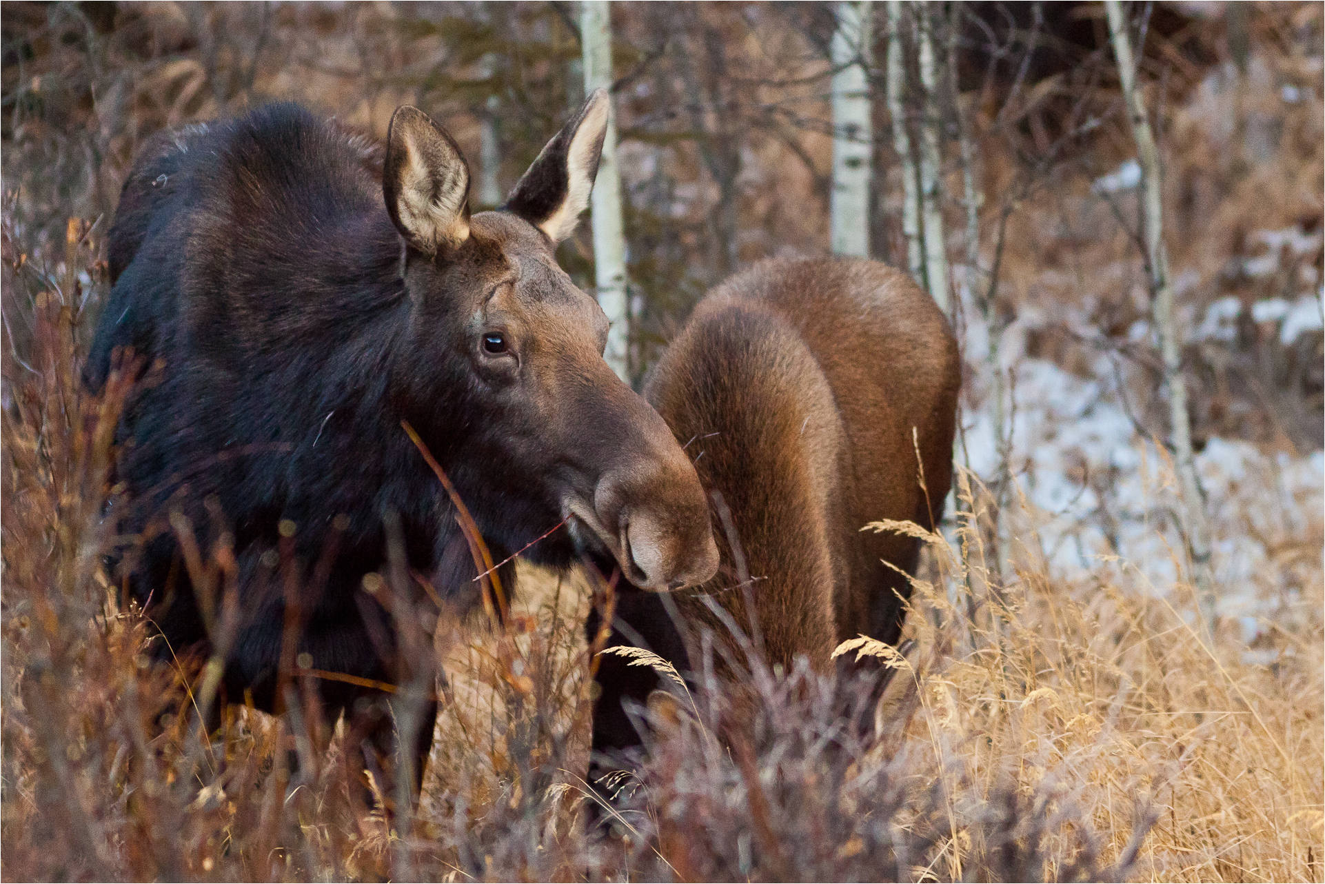 moose christopher martin photography page 2