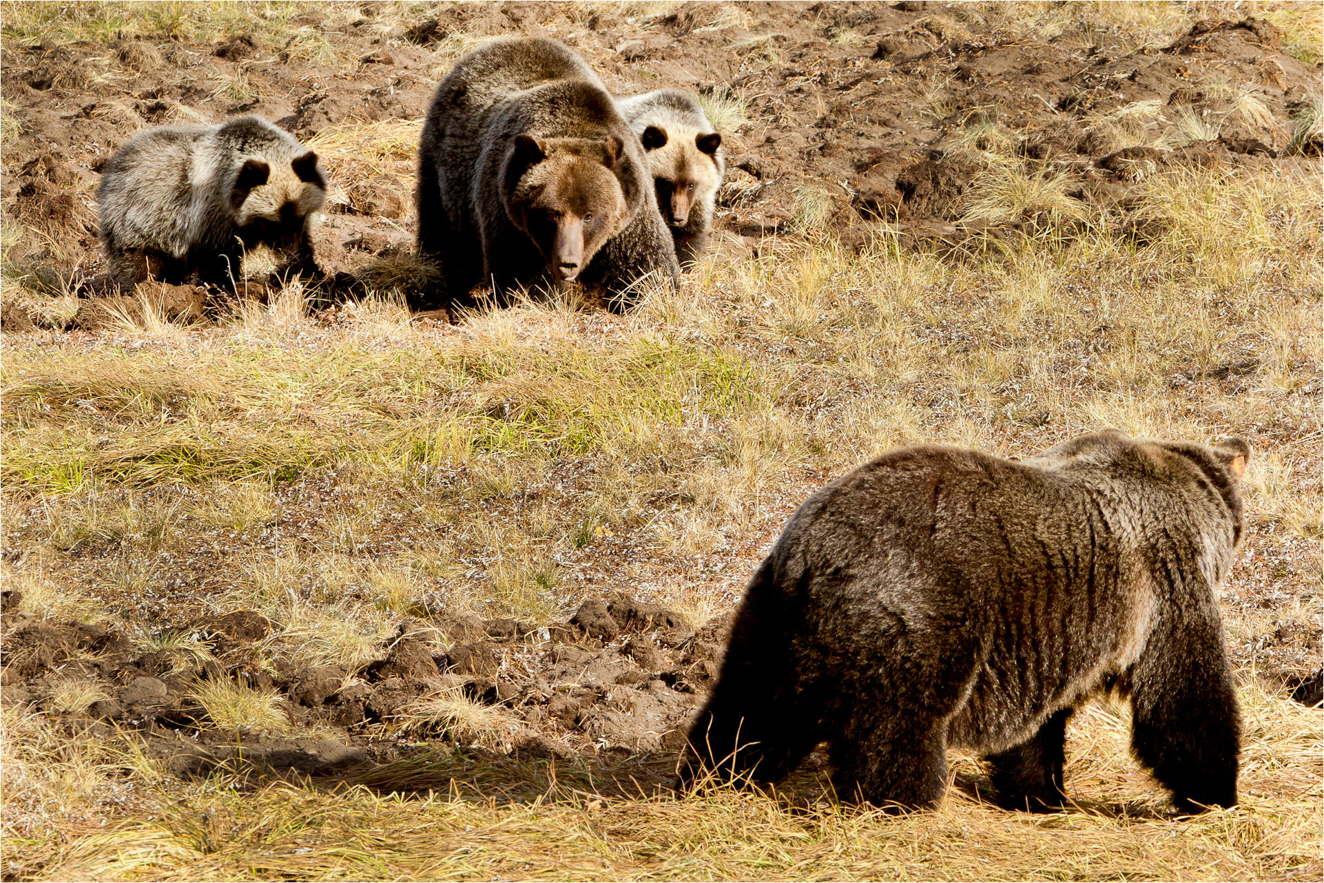grizzlies christopher martin photography
