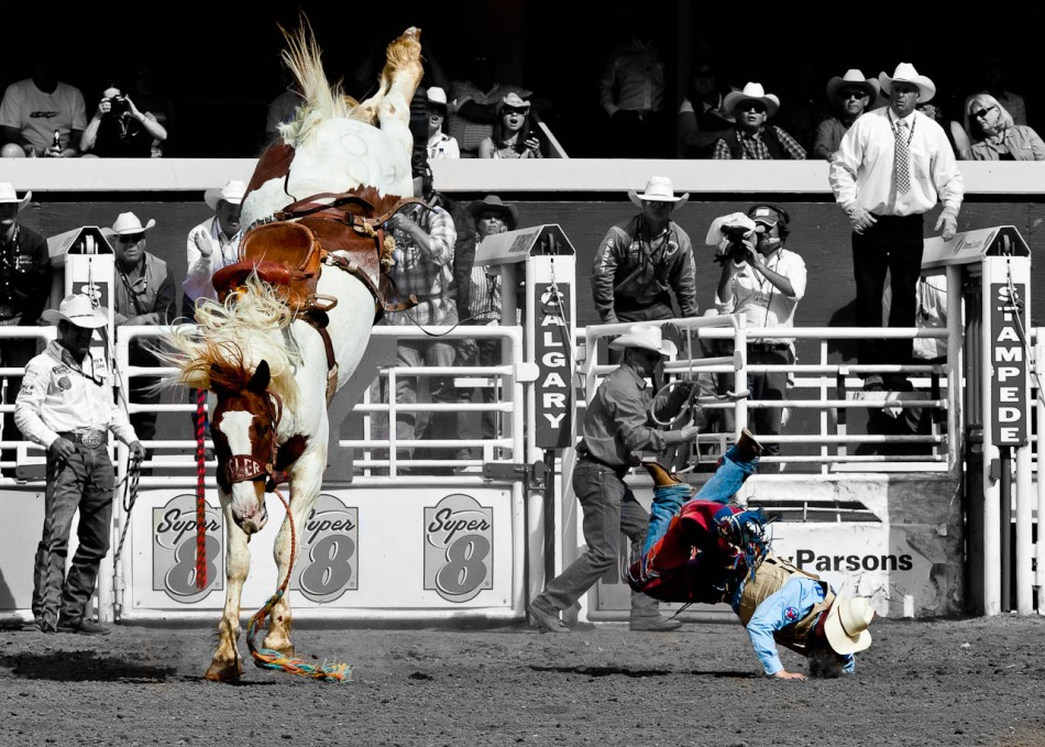 A rider crashes into the ground after being bucked off at the 2010 Calgary Stampede.
