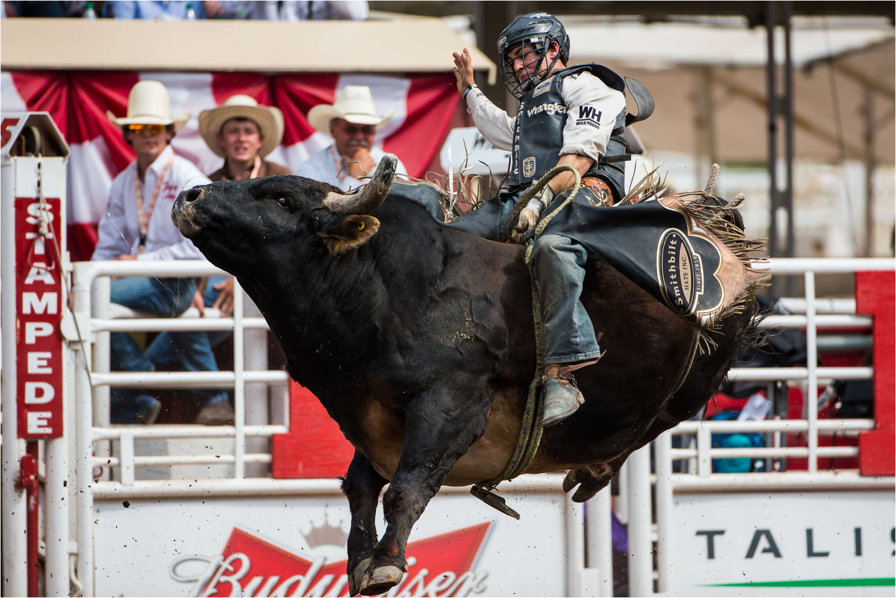 Bull Riding Christopher Martin Photography