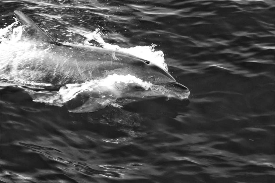 Dolphin spray - © Christopher Martin-4273-2