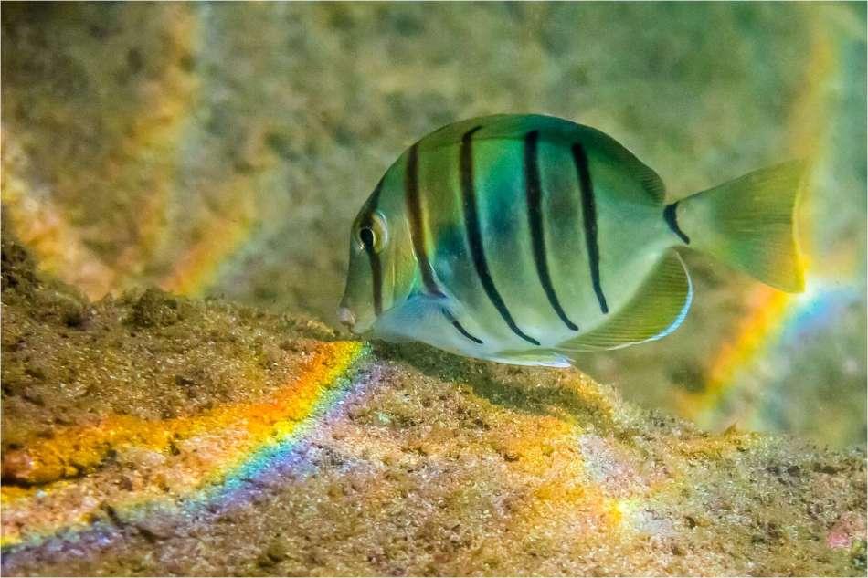 Feasting on rainbows - © Christopher Martin-2276