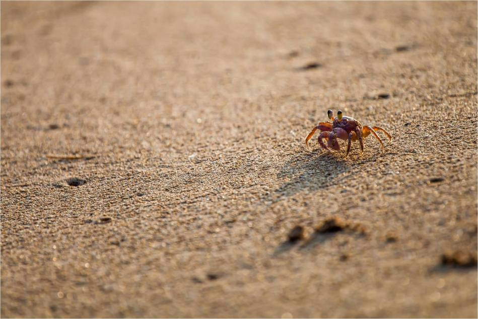 Scurrying along the beach - © Christopher Martin-4195