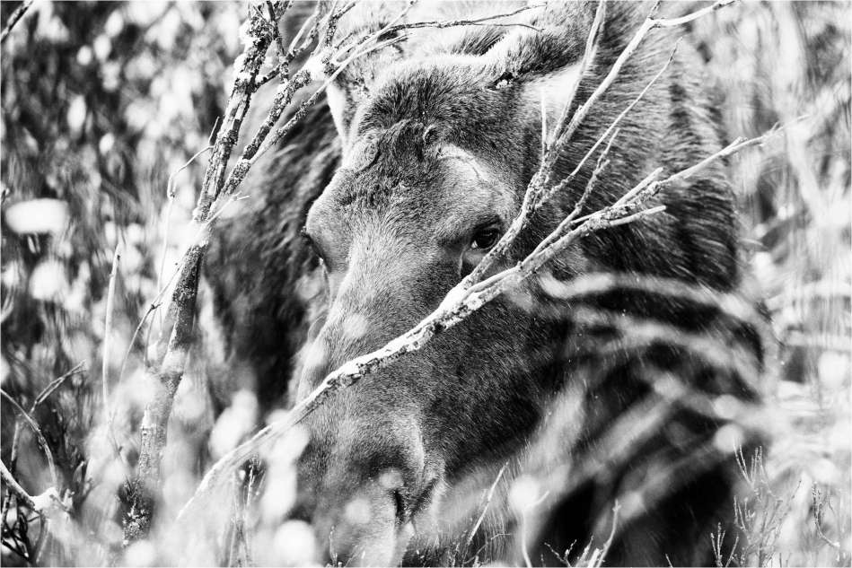 In the brambles - © Christopher Martin-7372