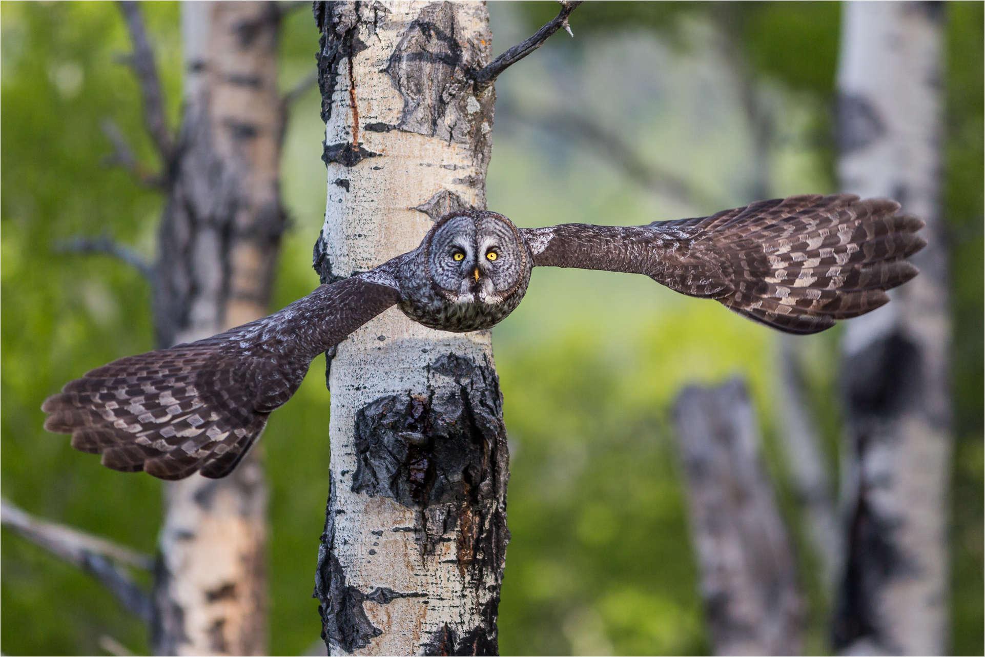 Forest flight - © Christopher Martin-1974