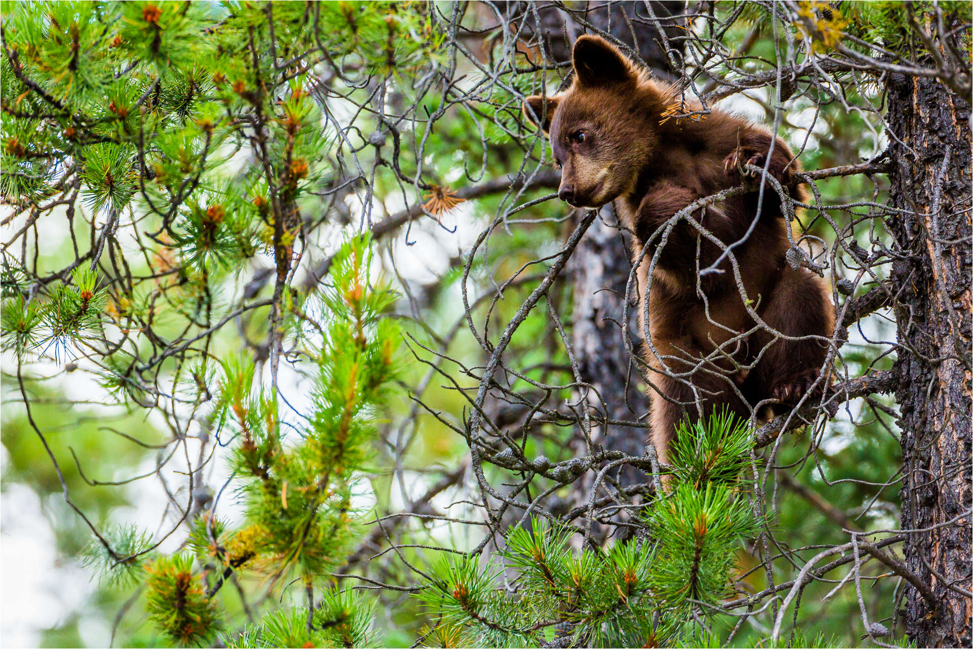 Cub scout - © Christopher Martin-3942