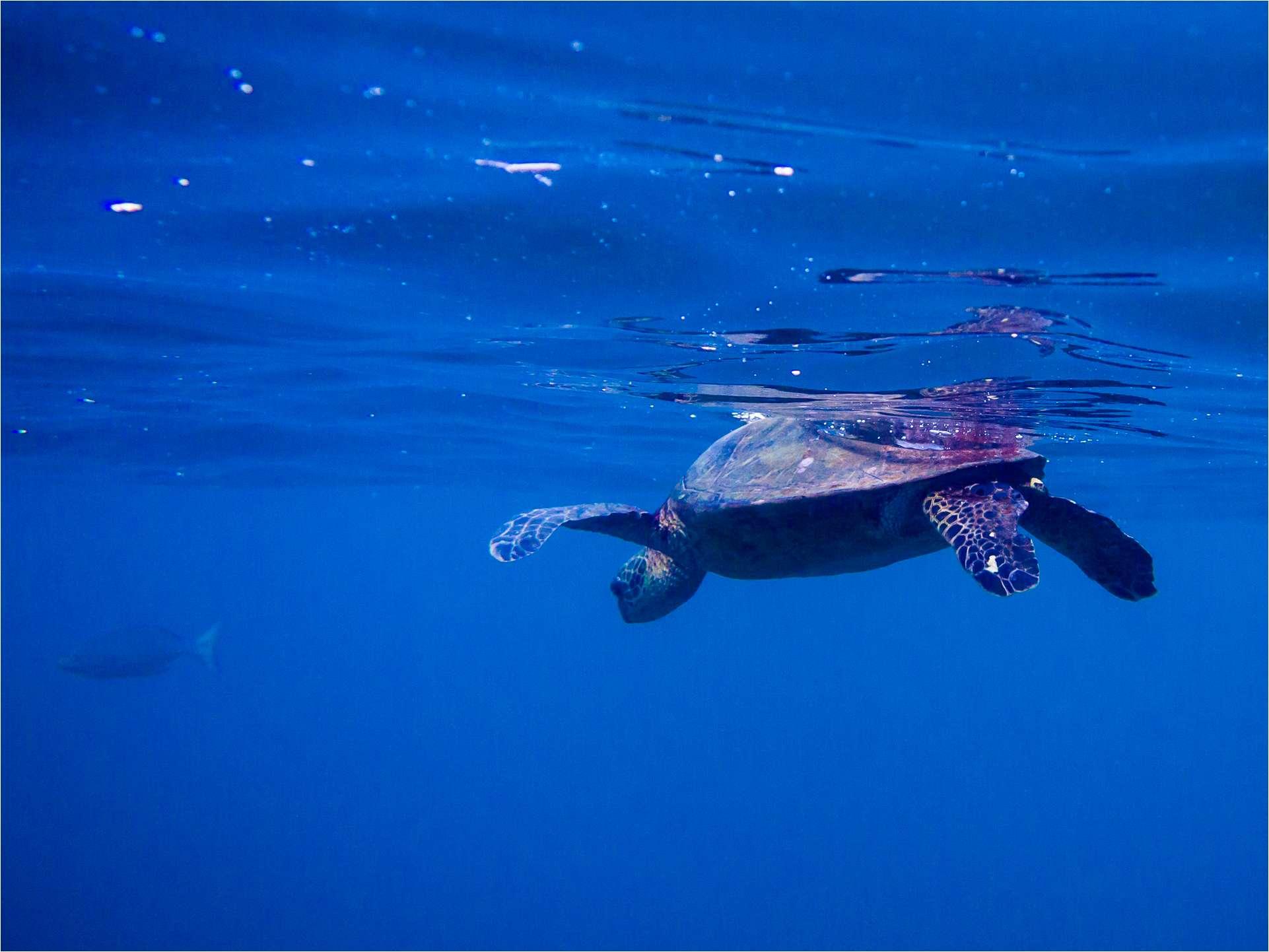 Turtle magic © Christopher Martin-4298