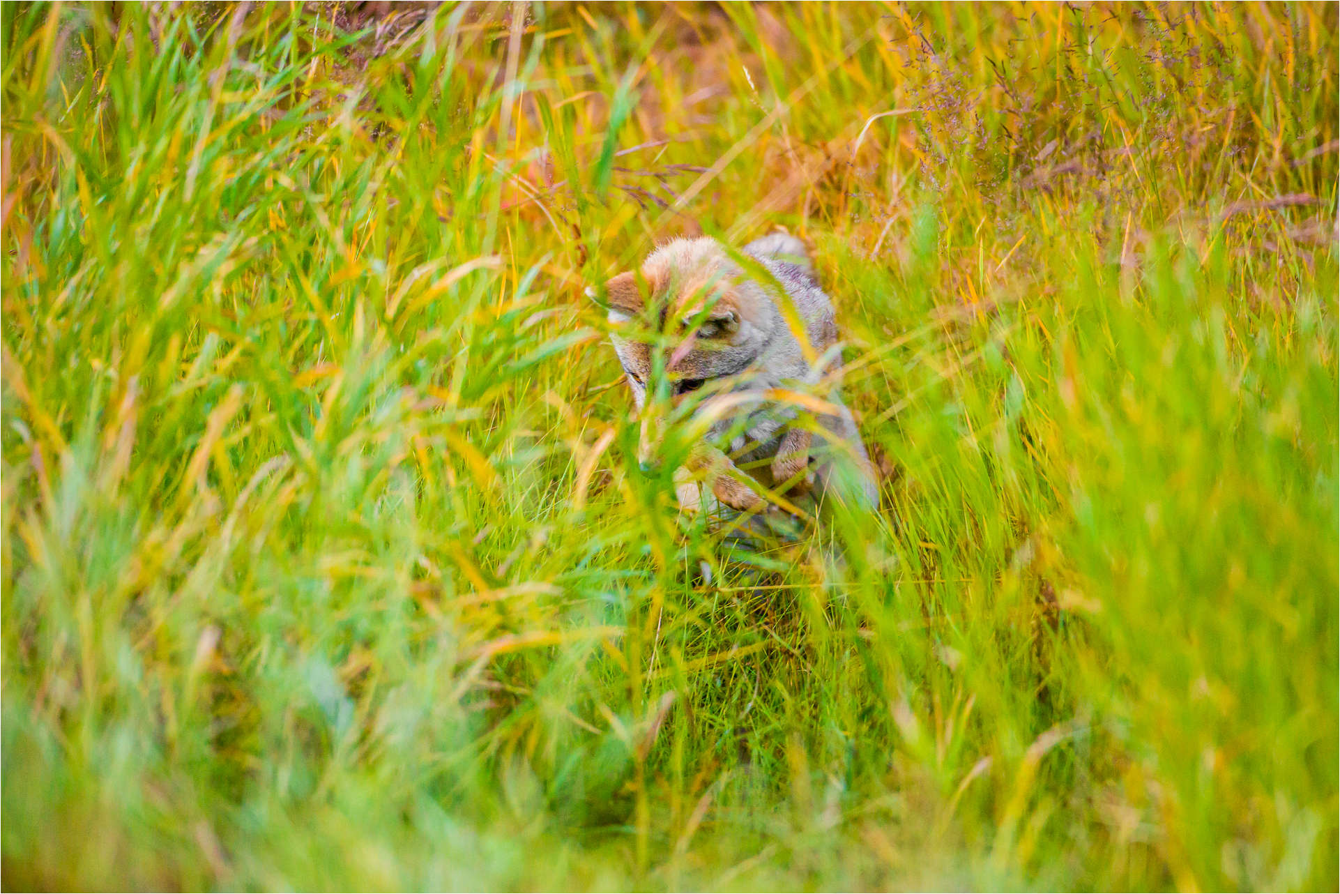 Hunting in the grass - © Christopher Martin-9706