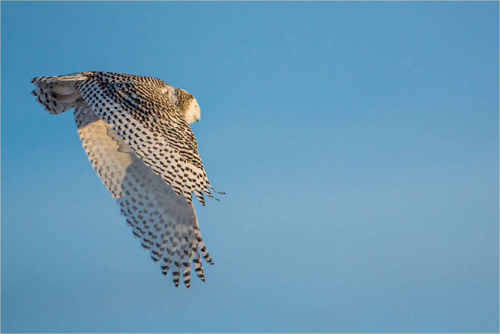 Flying away - © Christopher Martin-0178-2