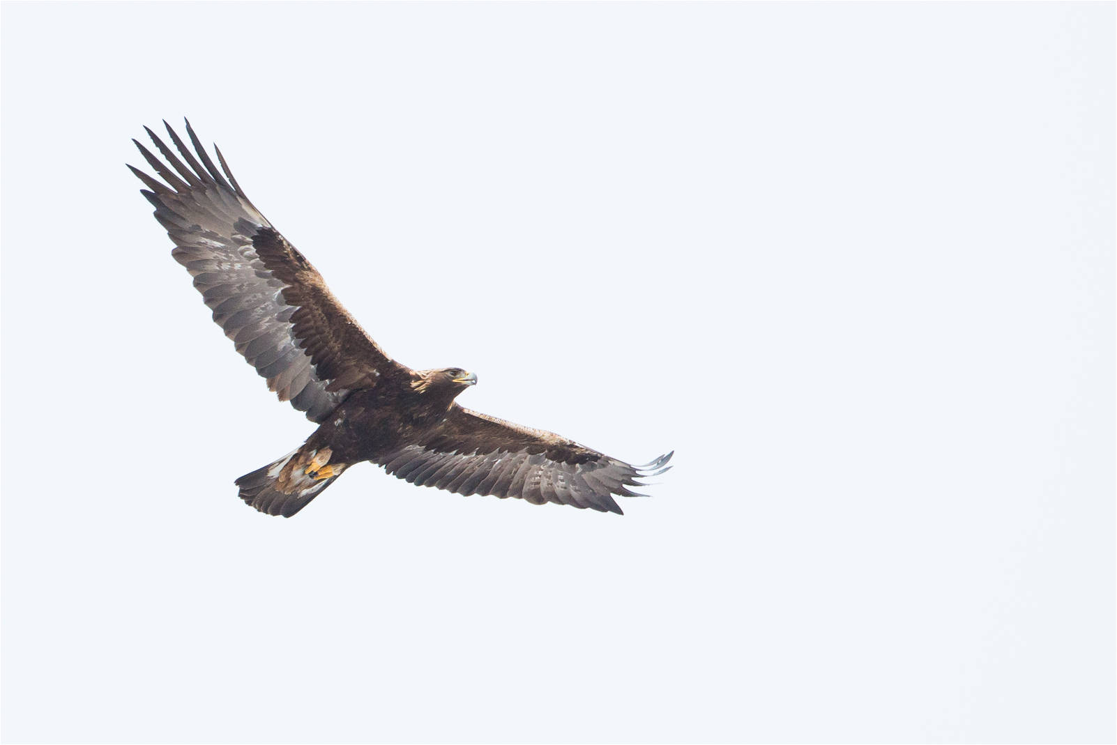 bald eagle | Christopher Martin Photography | Page 2