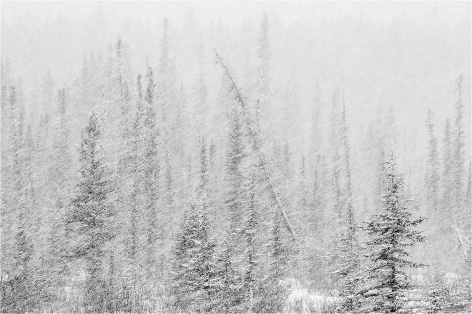 Snowstorm through the trees - © Christopher Martin-9870