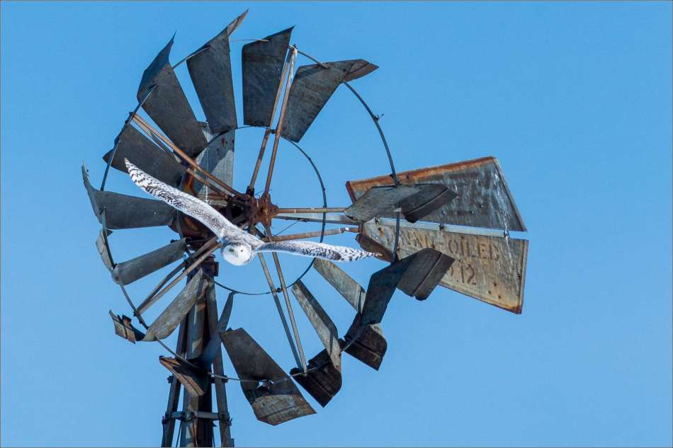 Gliding off of the windmill - 2013 © Christopher Martin