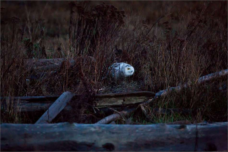 Stalking in Boundary Bay - 2013 © Christopher Martin