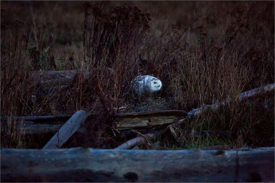 Stalking in Boundary Bay - 2013 © Christopher Martin
