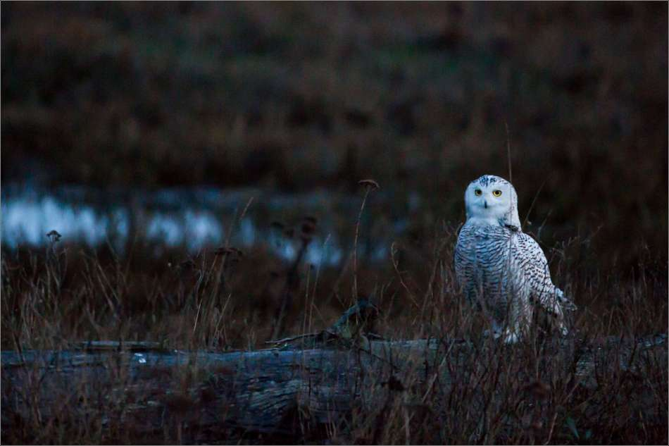 In the marsh - 2013 © Christopher Martin