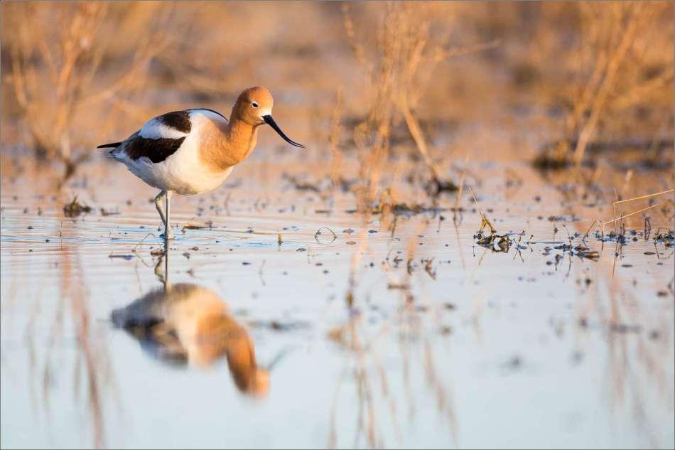 Marsh hunting - 2013 © Christopher Martin