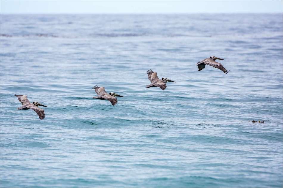 Ocean peloton - 2013 © Christopher Martin
