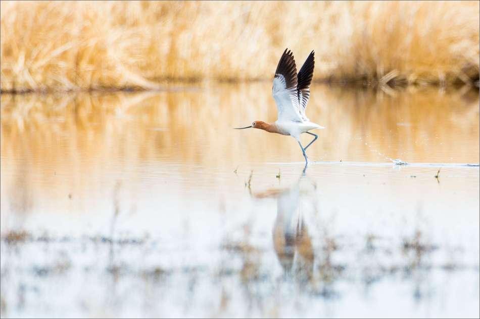 Water walker - 2013 © Christopher Martin