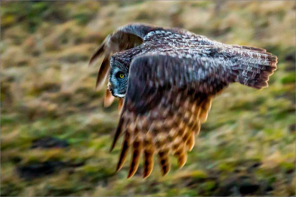 Dusk flight - 2013 © Christopher Martin