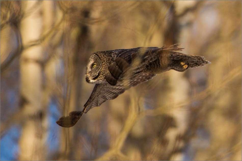 Forest flight - 2013 © Christopher Martin