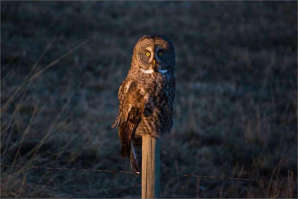 Good night dear owl - 2013 © Christopher Martin