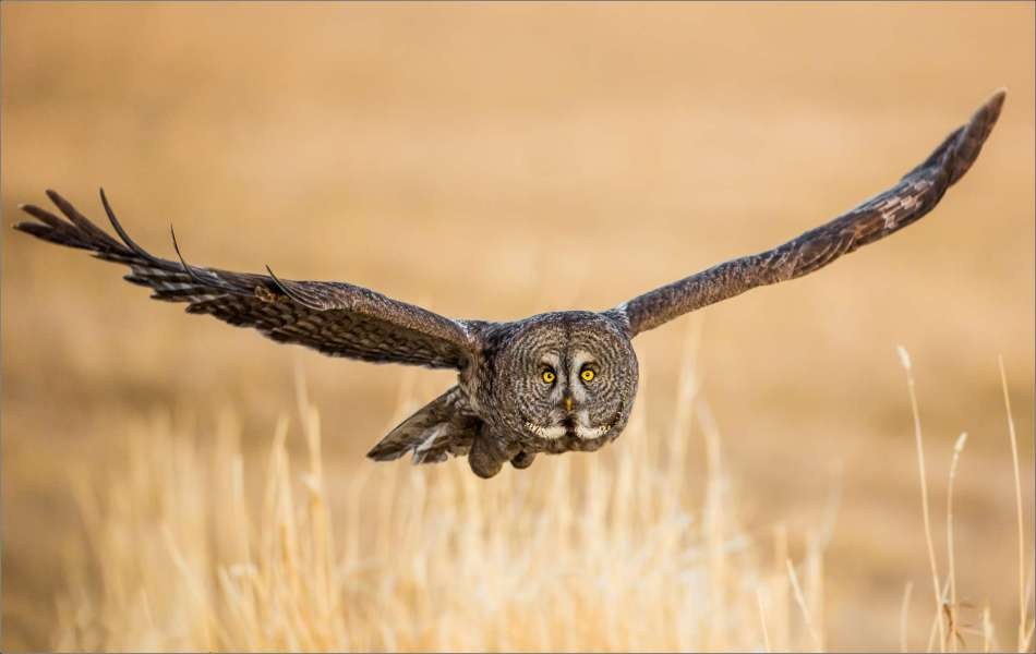 Owl scout - 2013 © Christopher Martin