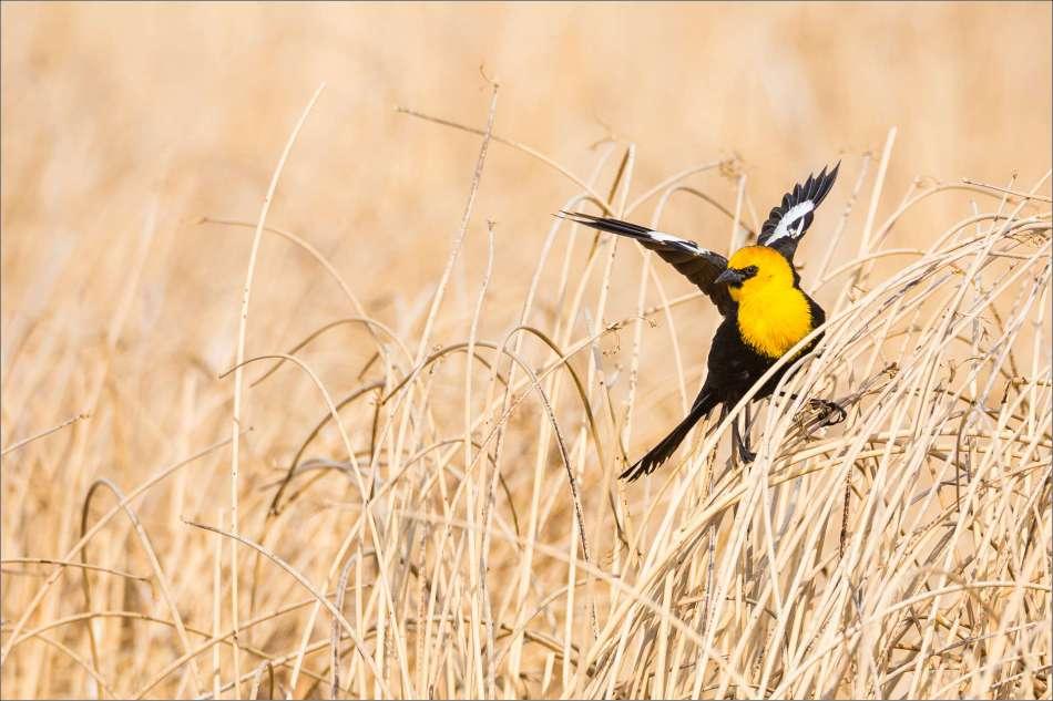 A balanced landing - 2013 © Christopher Martin