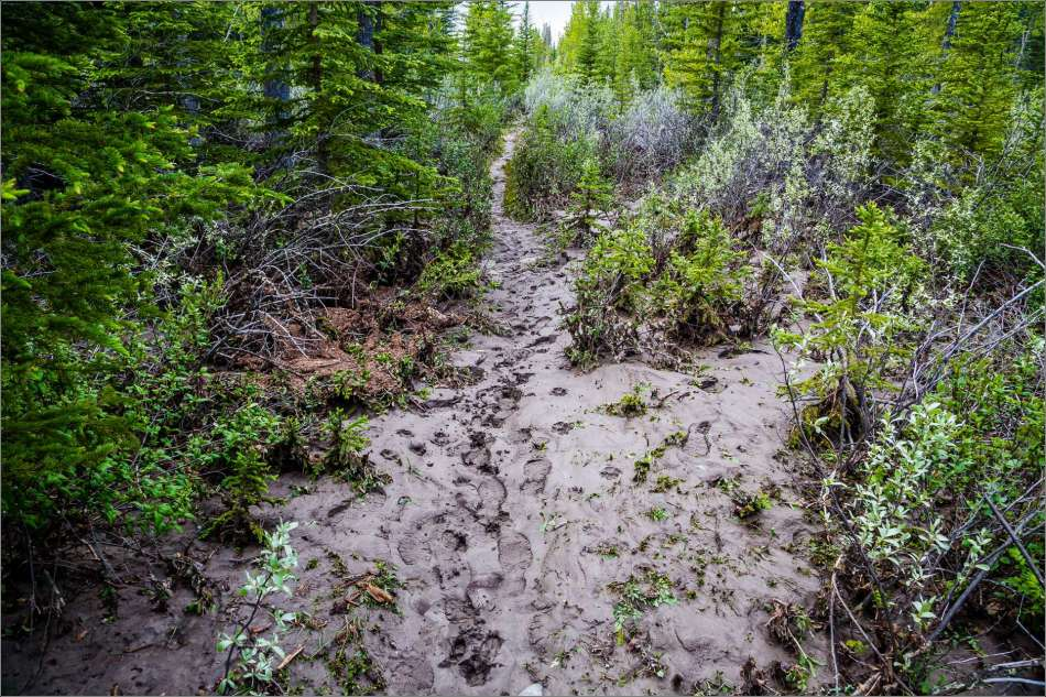 A layer of mud blankets the forest near the Elbow.