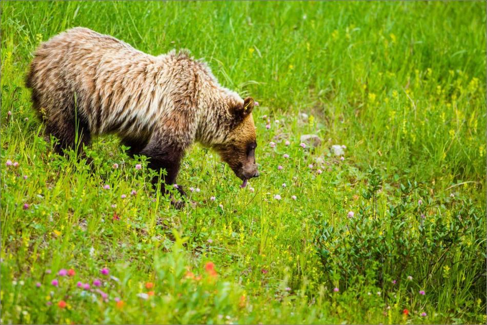 Bear lick - © Christopher Martin-0082