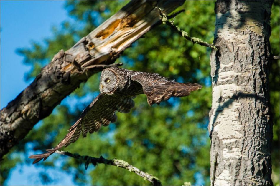 Forest flight - © Christopher Martin-8762