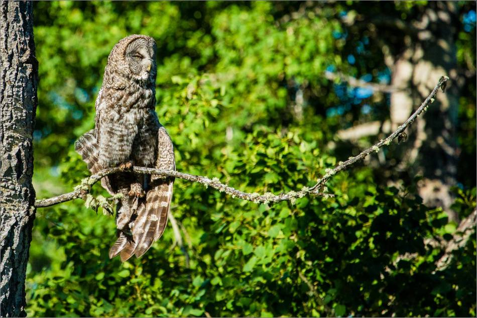 Owl yoga - © Christopher Martin-8734