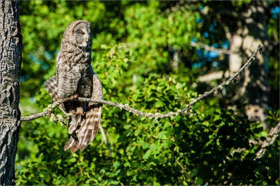 Owl yoga - © Christopher Martin-8734
