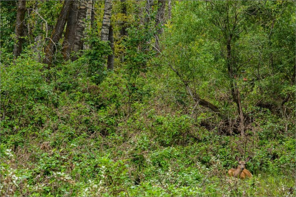 Resting in Baker Park's woods - 2013 © Christopher Martin
