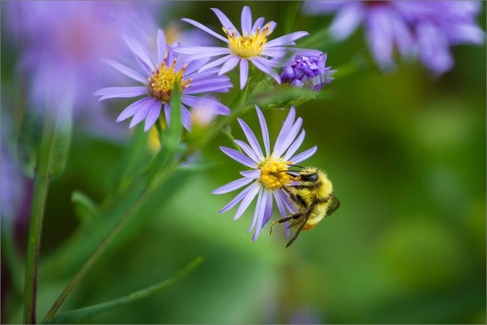 Bee's work - 2013 © Christopher Martin