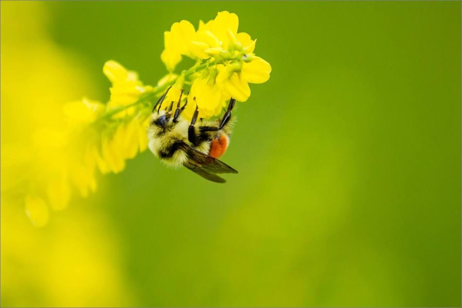 Honey: Step One - 2013 © Christopher Martin