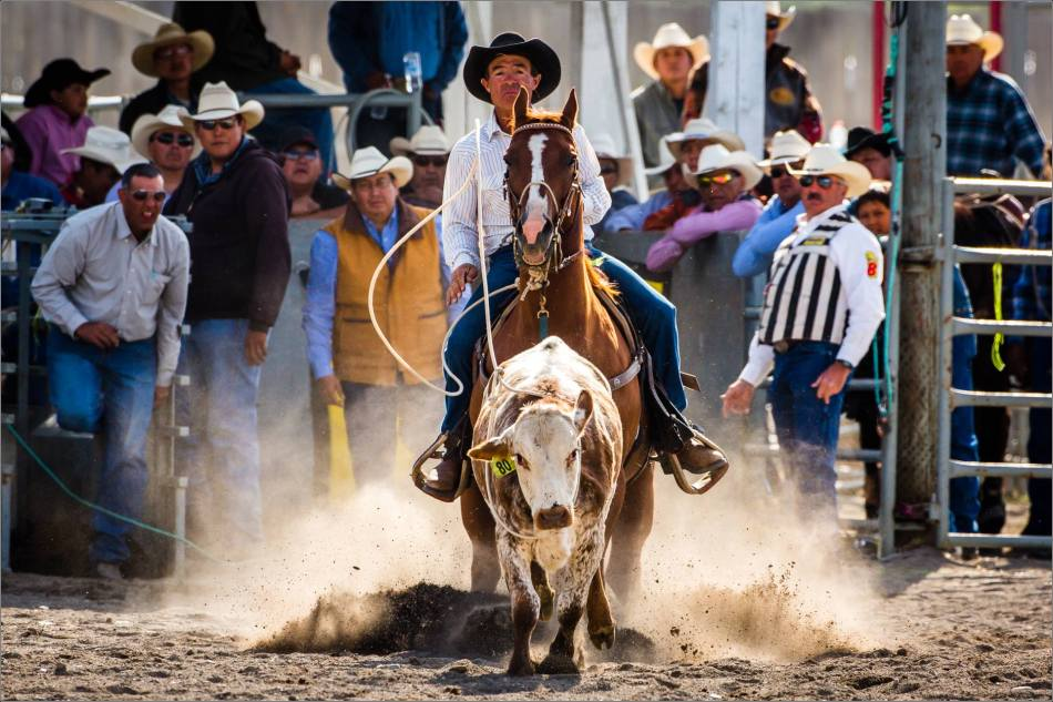 Roping with the crowd - 2013 © Christopher Martin