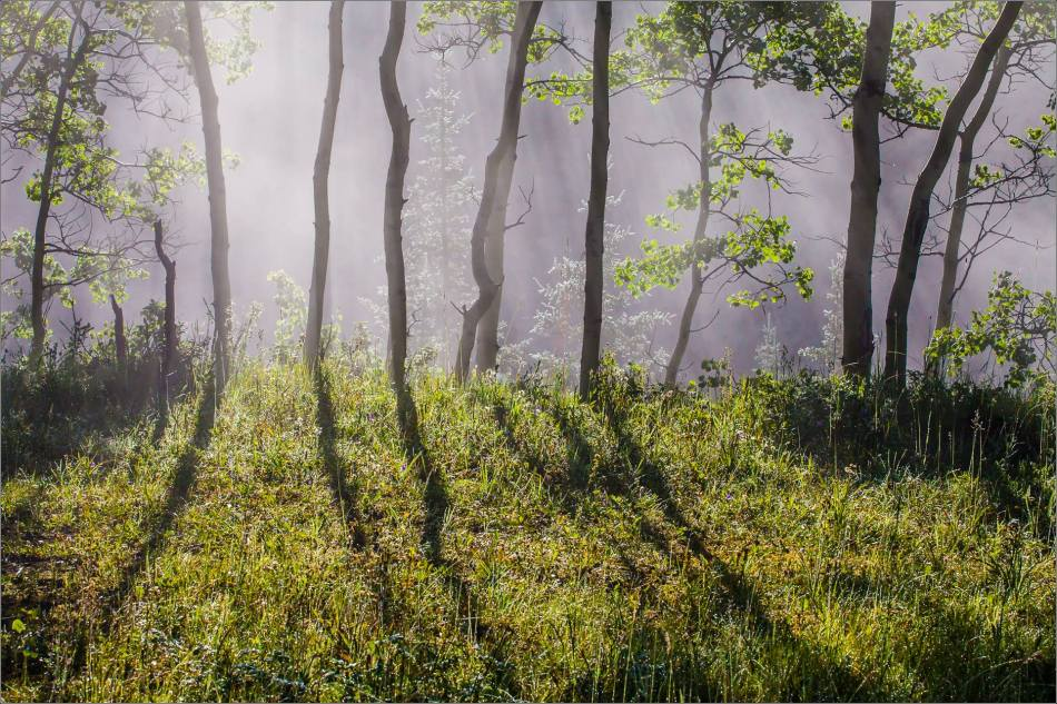 Forest morning - 2013 © Christopher Martin-0428