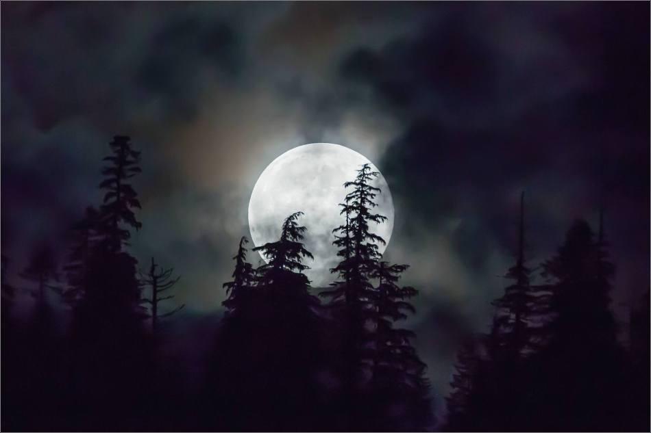 The Khutzeymateen's Blue Moon - 2013 © Christopher Martin
