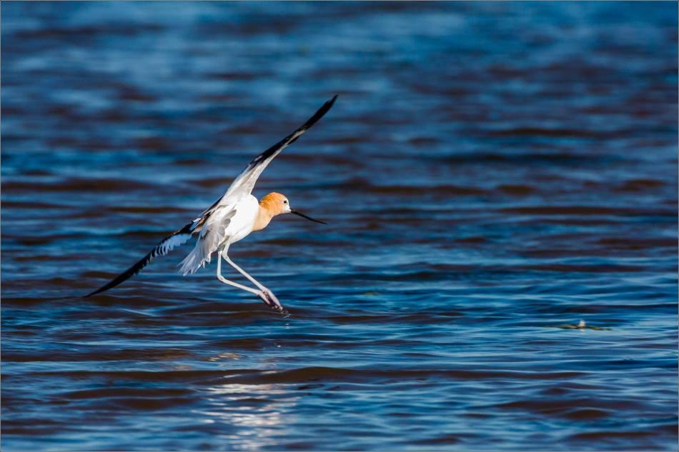 Reching for the landing - 2013 © Christopher Martin