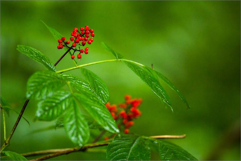 Berries in the wilds - 2013 © Christopher Martin