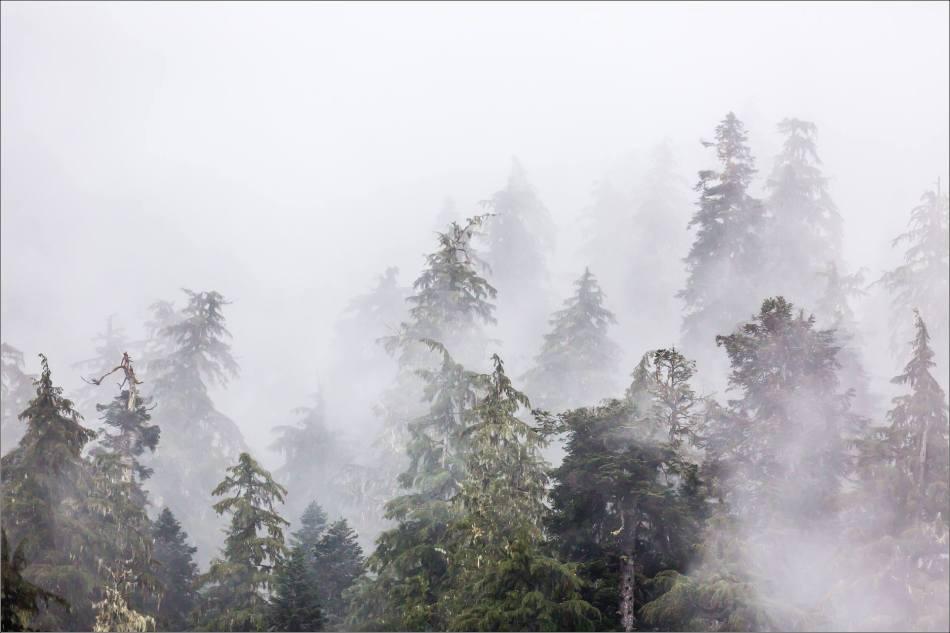 Forest in mist - 2013 © Christopher Martin