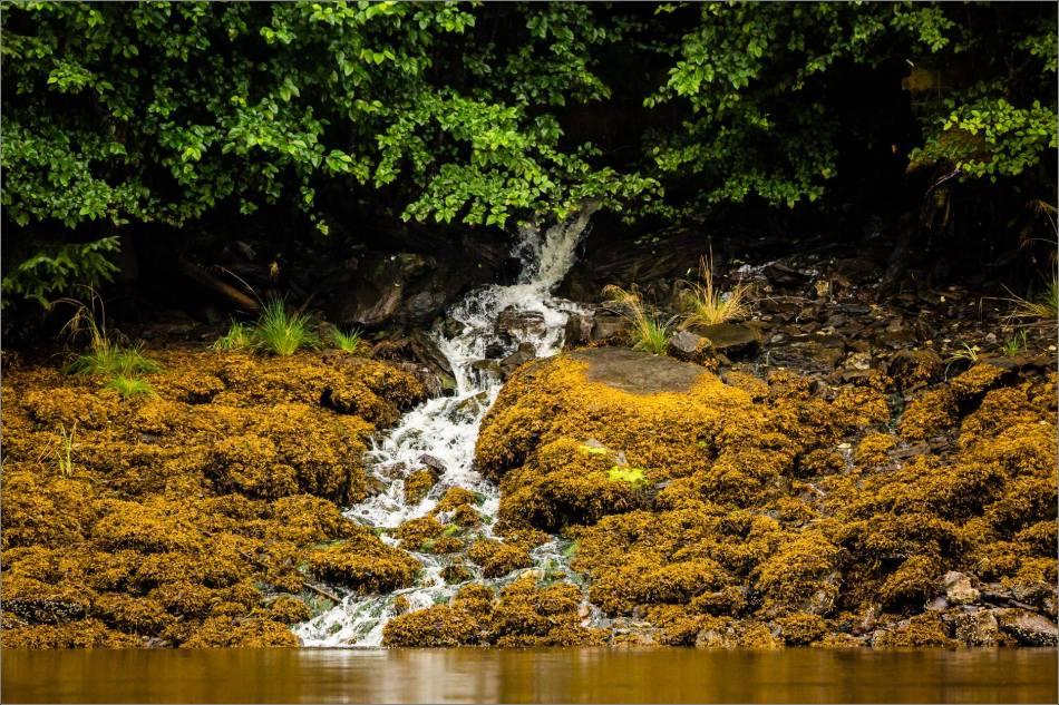 A spontaneous creek - 2013 © Christopher Martin