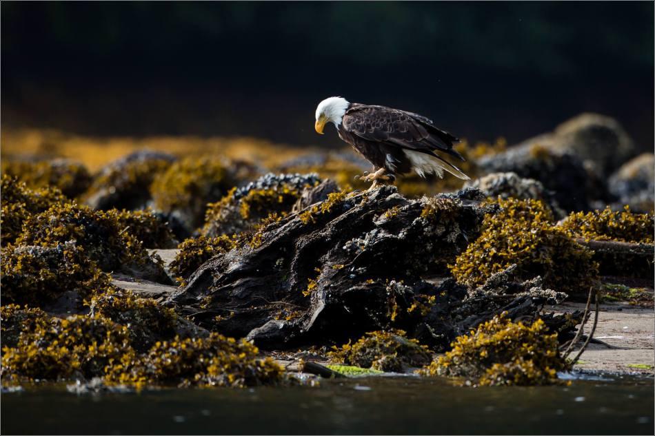 Rocky perch - 2013 © Christopher Martin