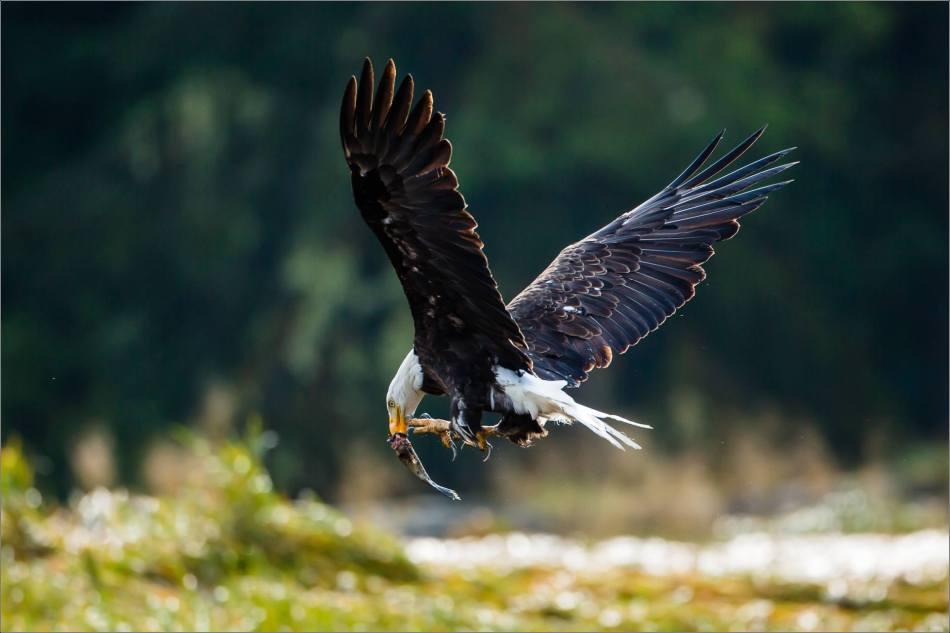 Beak to talon - 2013 © Christopher Martin