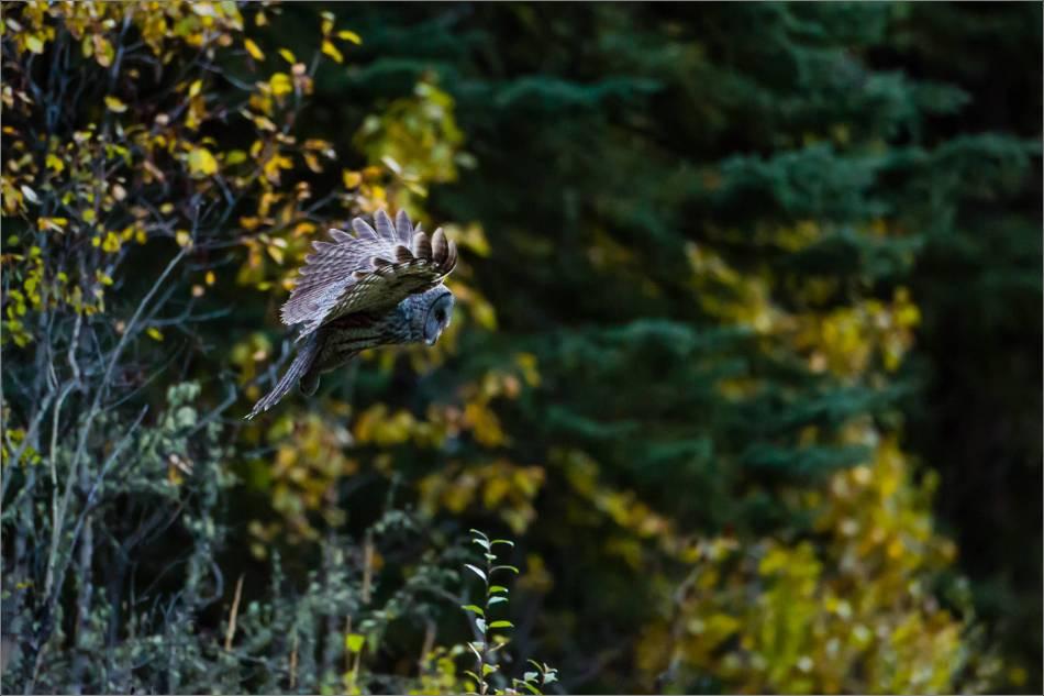 Morning hunt - 2013 © Christopher Martin