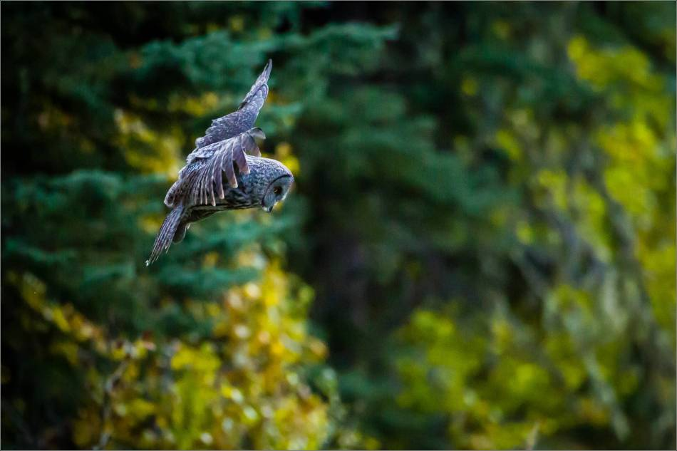 Hovering in flight - 2013 © Christopher Martin